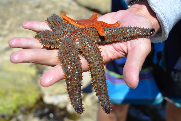 De Hoop Marine Protected Area