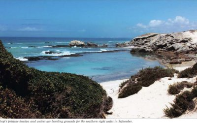 Find hope in De Hoop Collection Nature Reserve – Weekend Argus