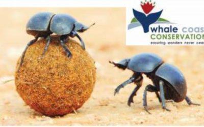 Digging those Dung Beetles