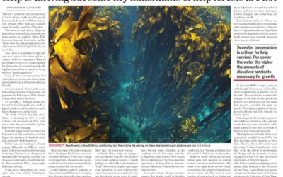 Kelp is thriving but some key inhabitants of kelp forests are not..