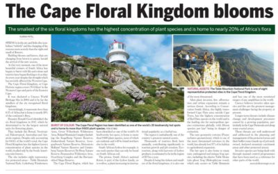 The Cape Floral Kingdom blooms