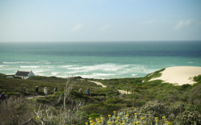 Sight for Shore Eyes – De Hoop's Abundant Shoreline