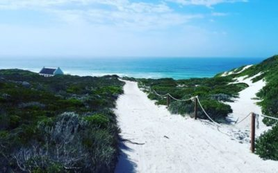 Whiling away days at De Hoop – a nature lover's respite