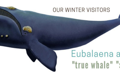 Whales have Arrived [ + fun Whale Infographic]