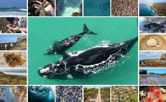 Ocean Wonders at De Hoop Marine Reserve