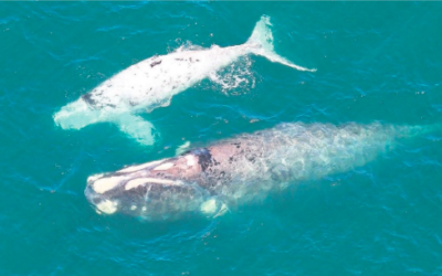 'Second lowest' whale count