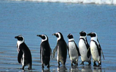 CURB MOOTED TO SAVE PENGUINS