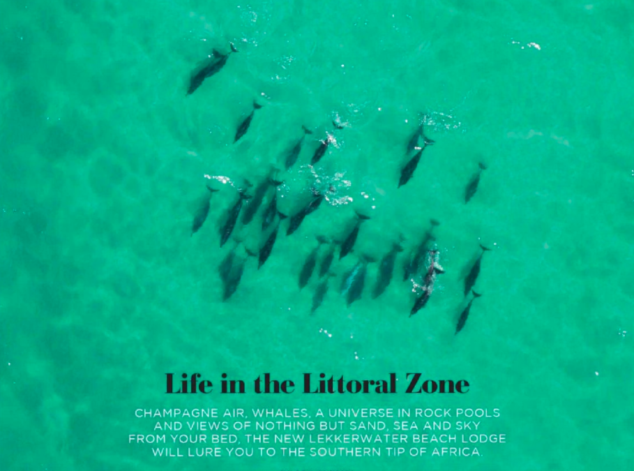 LIFE IN THE LITTORAL ZONE