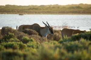 De Hoop Animals and Surrounds-
