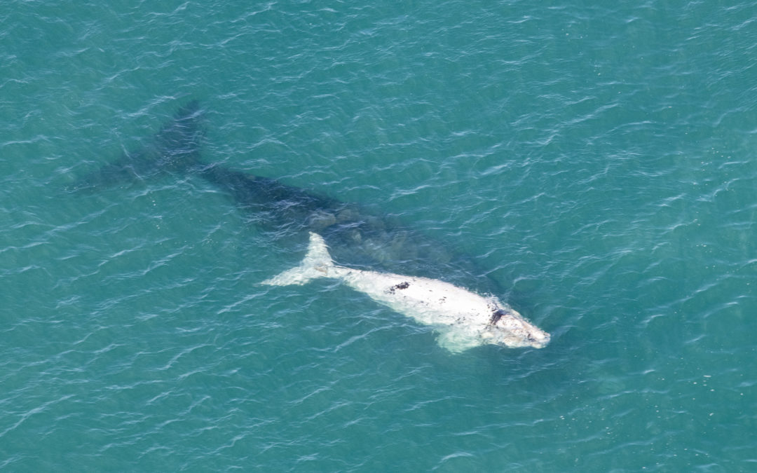 A new all-time record for whale sightings at De Hoop!