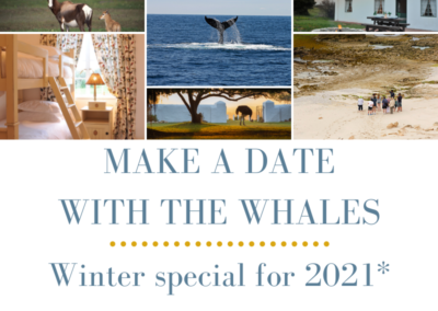 Make a date with the whales, Winter special for 2021*
