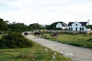 De Hoop Animals and Surrounds-